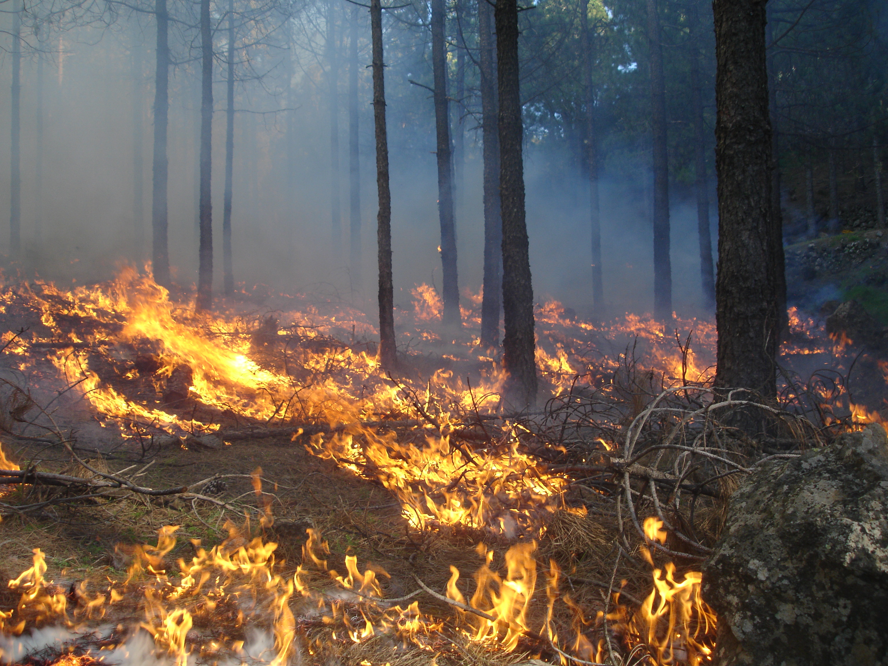 Forex incendios forestales